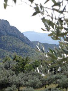 olijfgaarden in Buis-Les-Baronnies